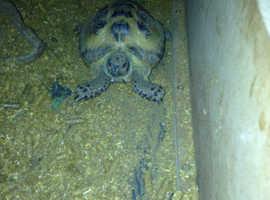 Lovely tortoise with full set up