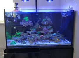 Marine fish tank complete