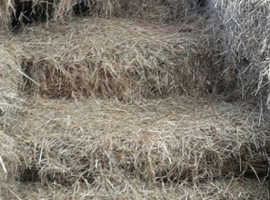 Meadow Hay 2019- small bales
