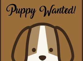 Puppy cockapoo/labradoodle wanted for 10 weeks time!
