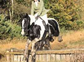 Bow 15.1hh Cob mare for share in Arborfield - Berkshire