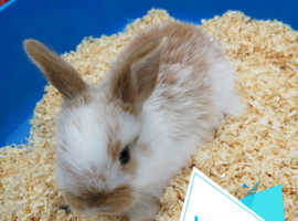Baby rabbits available 12th july
