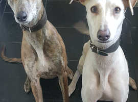 Two beautiful sisters ready for rehoming