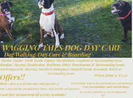 Wagging Tails Dog Day Care