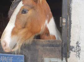 13-13'2 pony