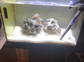 2 marine clownfish & 1 red legged crab