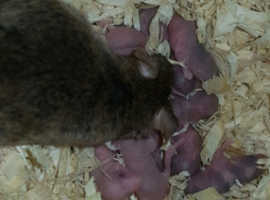Variety of mice
