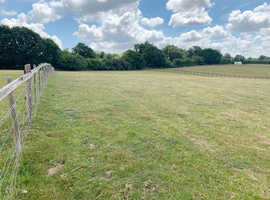 Wanted paddock or grazing land for 3 alpacas