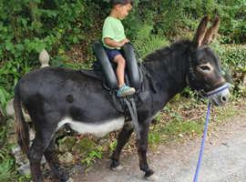 Oscar, Sweet 7yo Riding Jack Donkey