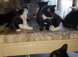 6 frenly kittens