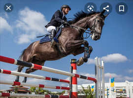 *WANTED* under 15hh horse