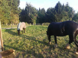 Stables and outside paddocks in stourport and surrounding areas wanted
