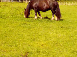 Lovely mare