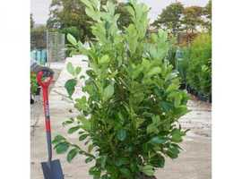 Hedging plant's instant