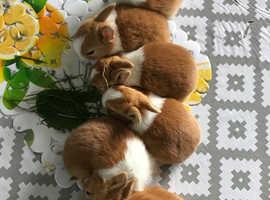 Baby healthy duches rabbit