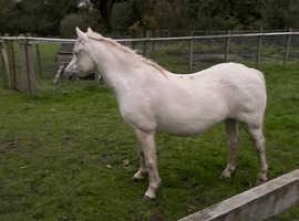 Pc pony or LR