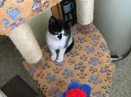 Very cute kitten for sale.