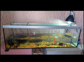 Turtles and turtle tank for sale !