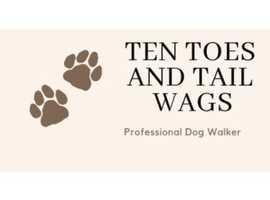 Dog walking/sitting service
