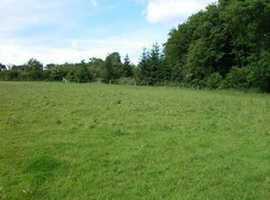 Looking for livery, grazing, yard share or rent