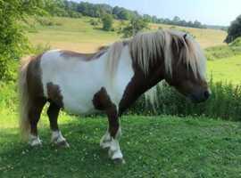 Mini and midi stallions