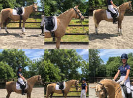 Mega pony for sale - kind and easy