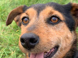 Terrier looking for a new home