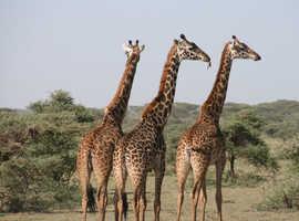 Africa Nature Photography & Safaris