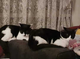 2 kittens left 16 week old