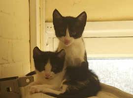 Beautiful 9 week old kittens