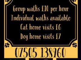 ViPaws Bespoke Dog Walking and Pet Home visiting service.