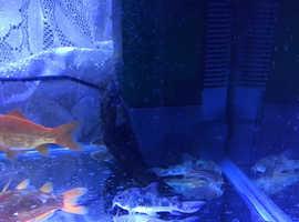 9 catfish 2 pleco 1 bristlenose pleco