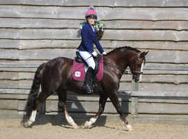 Fabulous dressage/all-rounder pony