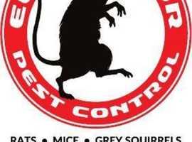 Swansea Pest Control
