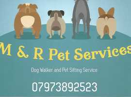 Fun, friendly dog walking service