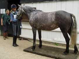 Portable horse weighing platform