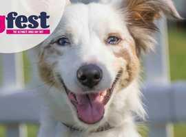 DogFest Tatton Park tickets