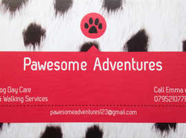 Pawesome Adventures Dog walking and Day Care Services