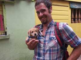 Tonbridge dog walking services