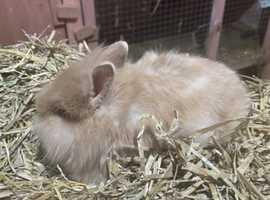 Incredibly tiny and friendly baby rabbits
