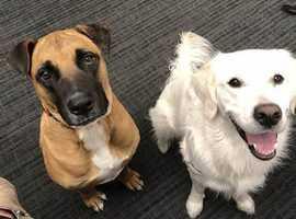 dog walker looking for dogs to walk in ellesmere or Oswestry