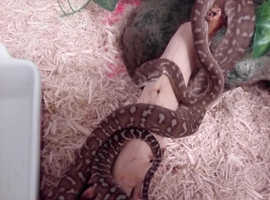 Reptile Rescue South Wales