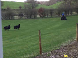 Grass & DIY Stabled livery available with great hacking in Bonhard, Perth