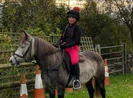 Riding Pony