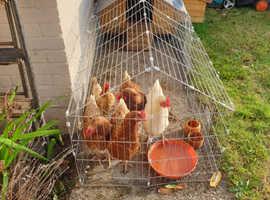 Chicken coop plus run with 4 hens