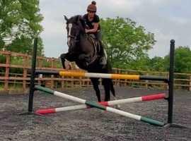 Phenomenal jumping horse