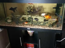Jewel 240L fish tank compleat with fish