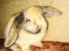 Various bunnies