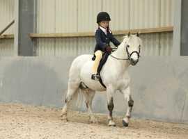 Genuine first pony for sale, Hamilton,  South Lanarkshire