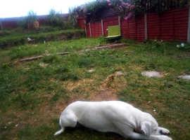 The Dog Nanny Wirral (dog boarding)